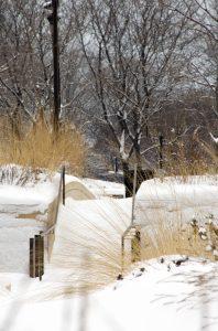 PHOTO: Gustafson Guthrie Nichol Ltd, Lurie Garden Winter '08, Millennium Park