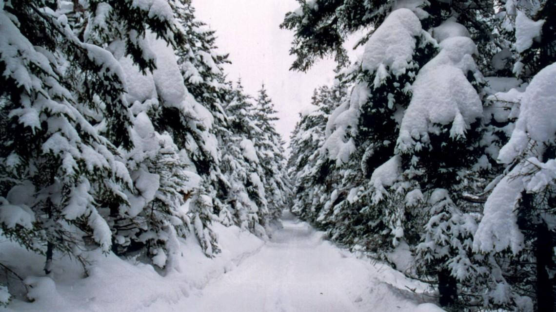 snow row of pines