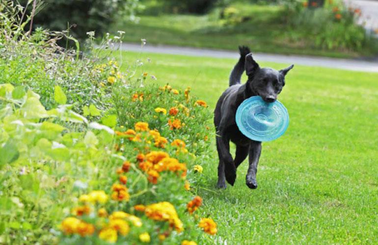 Pets Love Lawns