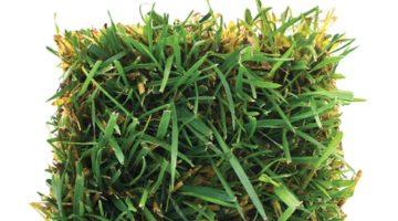 Turfgrass: Friend or Foe?