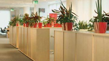 Plants Boost Worker Morale