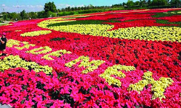 mexico floral carpet[5]