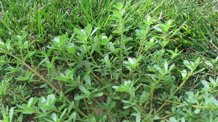 Top 5 Worst Weeds